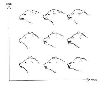 diagrammy-i-grafiki_40