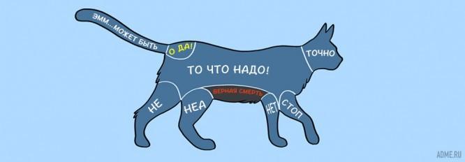 kak-pravilno-gladit-zhivotnyh_1