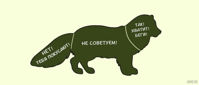 kak-pravilno-gladit-zhivotnyh_13