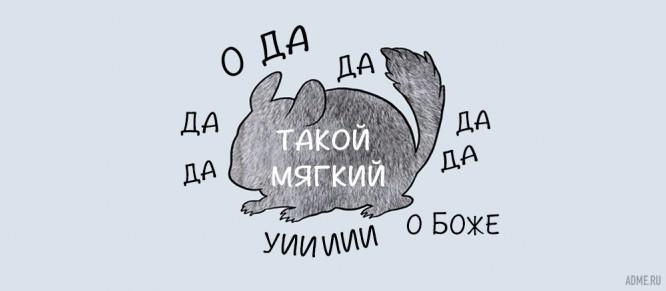 kak-pravilno-gladit-zhivotnyh_5