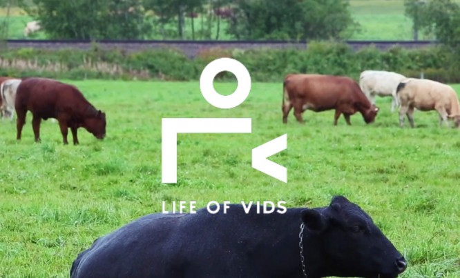 05-live-of-vids