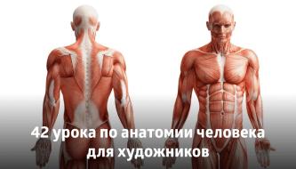 42 урока по анатомии человека для художников